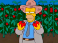 Tomacco: помидор и табак – вместе веселей